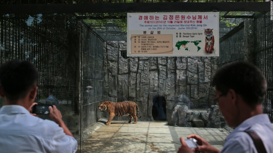 North Korean men snap pictures of a tiger at the Pyongyang Zoo.
