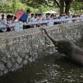 02 North korea zoo