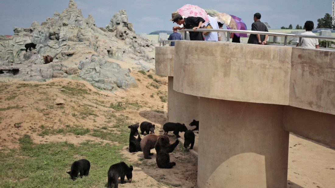 North Koreans peer down at bears at their newly opened zoo.