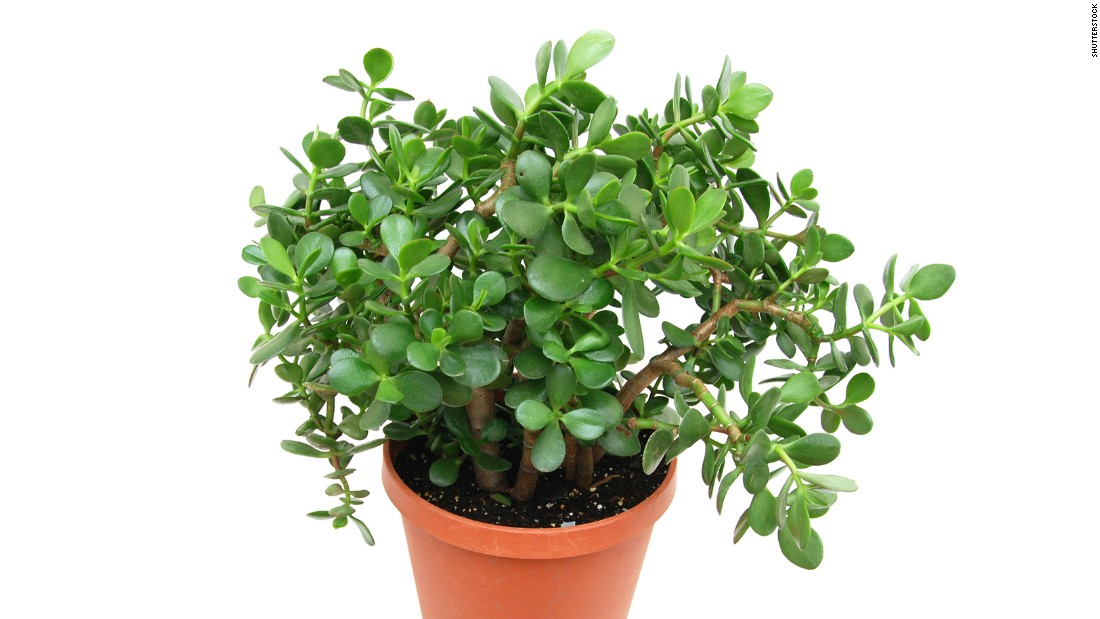Toxic chemicals are hiding in your house dust - Nice indoor plants ...