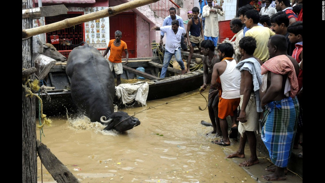 """People use a boat to transfer an ox near Patna, capital of the eastern Bihar state in India, on Saturday, August 20. <a href=""""http://www.cnn.com/2016/08/22/asia/india-minister-floods-madhya-pradesh/"""" target=""""_blank"""">Heavy monsoon rains</a> in several states across the eastern and central parts of the country have displaced tens of thousands and caused rivers, including the Ganges, to overflow."""