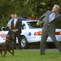White House dogs 8