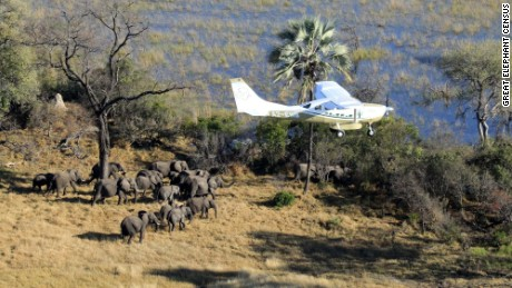 A survey plane spots a herd of elephants in Botswana.