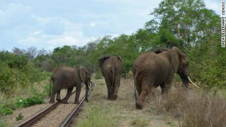 02 elephant census GECPhoto15