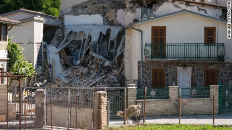 Stray sheep wander past the wrecked shells of homes in Accumoli.