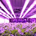 aerofarms led bright purple resized