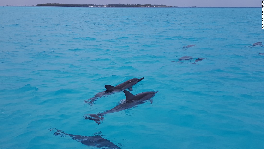 Midway is part of the Papahānaumokuākea Marine National Monument, the largest protected marine refuge in the world.