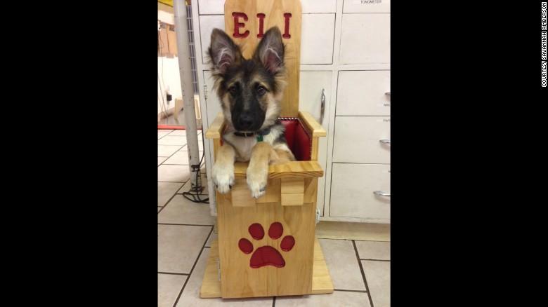 Bailey Chair Puppy