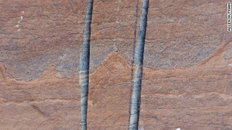 A stromatolite is a mound of up to 4cm formed by microbial colonies on the sea floor. Pictured, the fossil found in Greeland.