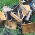 03 Zika spraying kills millions of bees