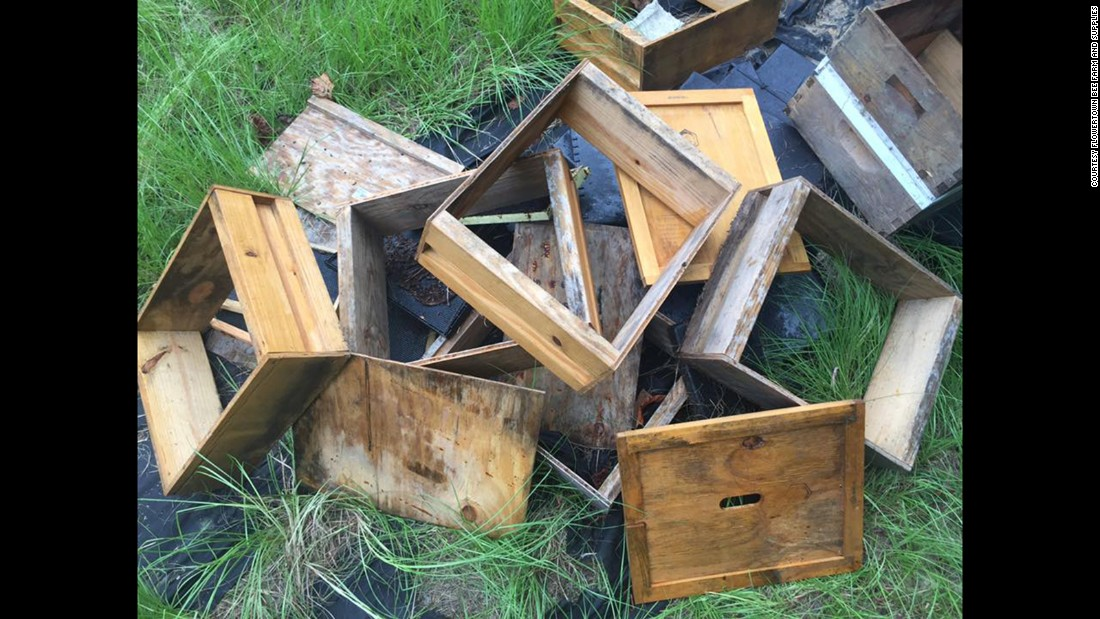 """""""This is all that's left of our once-thriving hives,"""" Stanley said."""
