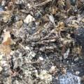 05 Zika spraying kills millions of bees