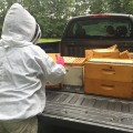 08 Zika spraying kills millions of bees