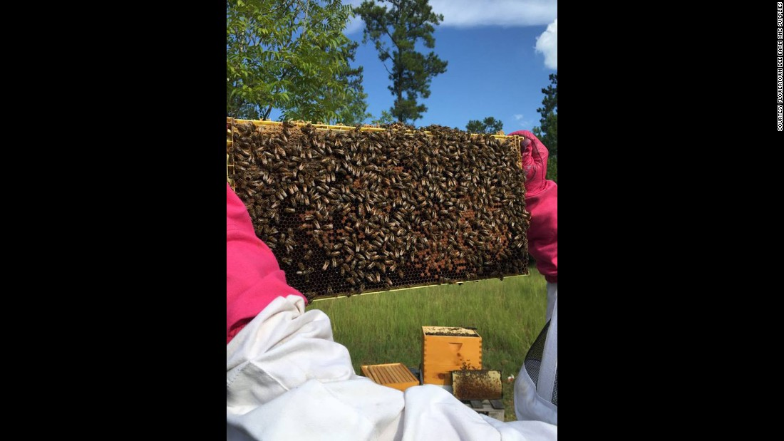 """This is what a hive looked like just before the spraying, said Juanita Stanley, co-owner of <a href=""""https://www.facebook.com/Flowertown-Bee-Farm-and-Supplies-169371146803372/?fref=ts"""" target=""""_blank"""">Flowertown Bee Farm and Supply</a>."""