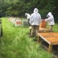 13 Zika spraying kills millions of bees