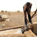 mauritania bedouin