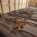 plague skeletons 1