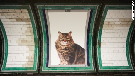 Cat posters have replaced adverts all over Clapham Common Tube station in London.