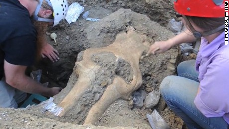 rare mammoth skull found