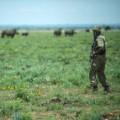 rhino dehorning 6