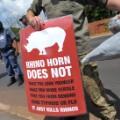 rhino dehorning 13 protest
