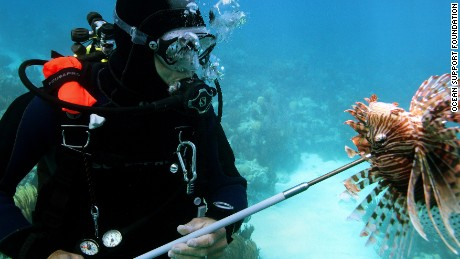 Spear fishing has proved effective in local areas, but not at scale.