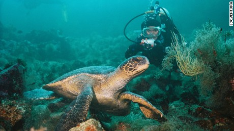 Animal encounters in the Galapagos -- on land and underwater -- are among the world's most unique.