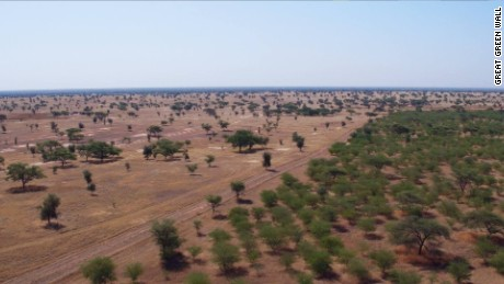 Wall of trees in Senegal, where much of the planting has taken place.
