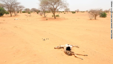 The remains of a goat lie in the sand in Katawane, near Nema, southeastern Mauritania, during a severe drought across the Sahel region in 2012.
