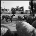 06 cnnphotos Sinjar RESTRICTED