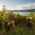 kelowna wine vineyards