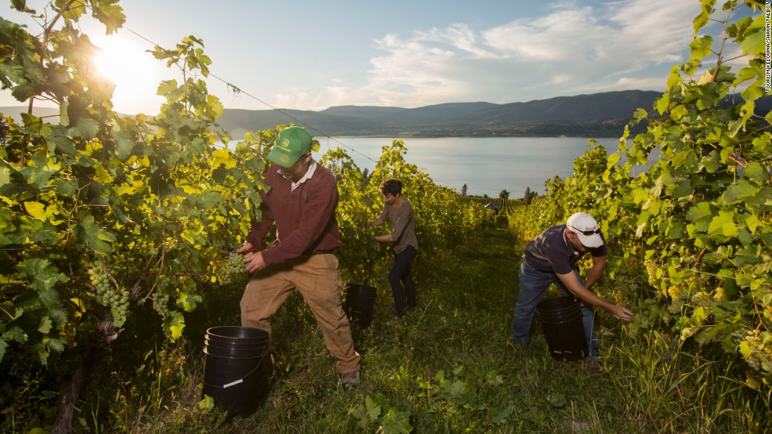 The Okanagan Valley is home to more than 80% of British Columbia's vineyard acreage.