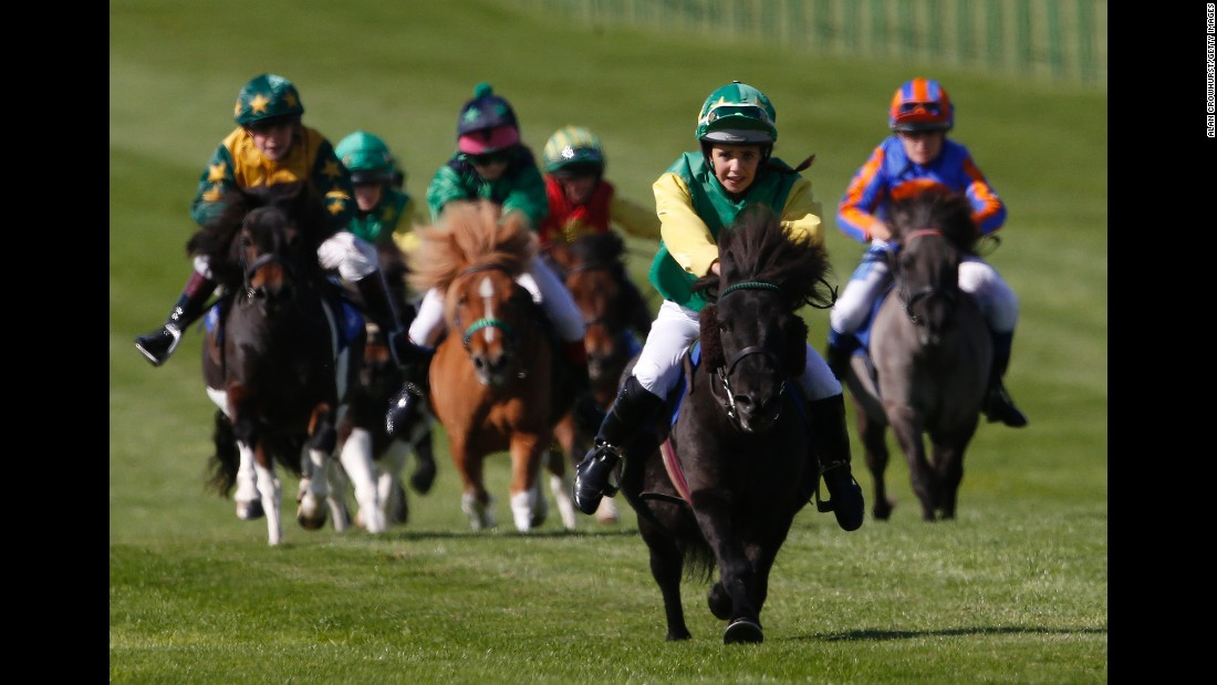 Jockeys race Shetland ponies in Newmarket, England, on Friday, September 23.