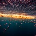 michael muller sharks photography 2