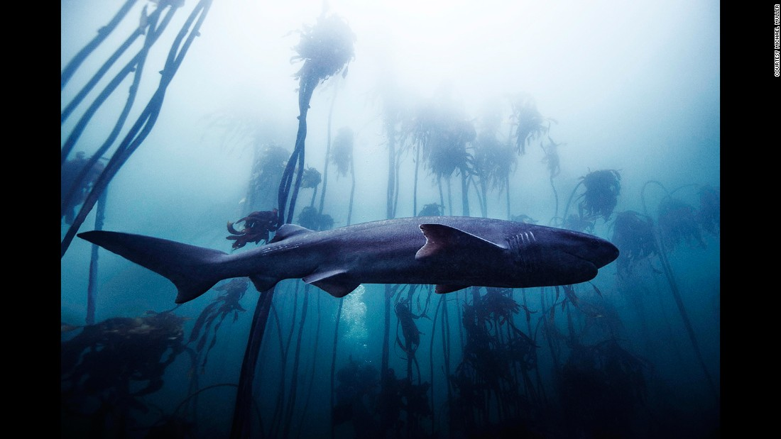 Photographer Michael Muller, best known for his music and film photography, has been photographing sharks for the last 10 years.