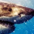 michael muller sharks photography 6