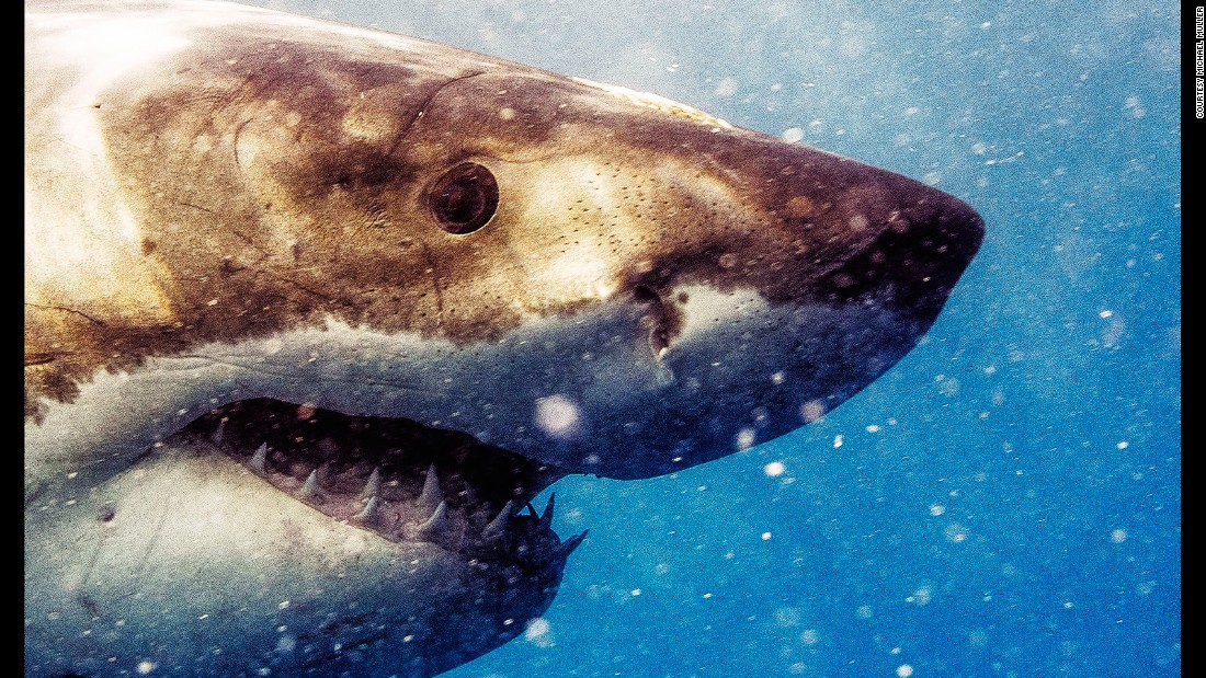 """""""The most startling thing was their eyes. From the moment I locked eyes with the sharks, I realized they saw me and I saw them, and there was a connection, so to speak,"""" Muller says."""