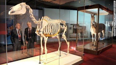 Phar Lap's skeleton and hide were reunited at the Melbourne Museum in 2010.