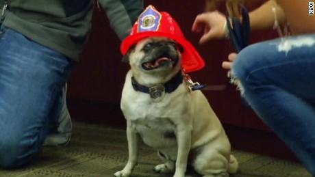 dog wins hometown hero award pkg_00002215