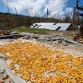 03 Hurricane Matthew Haiti 1008