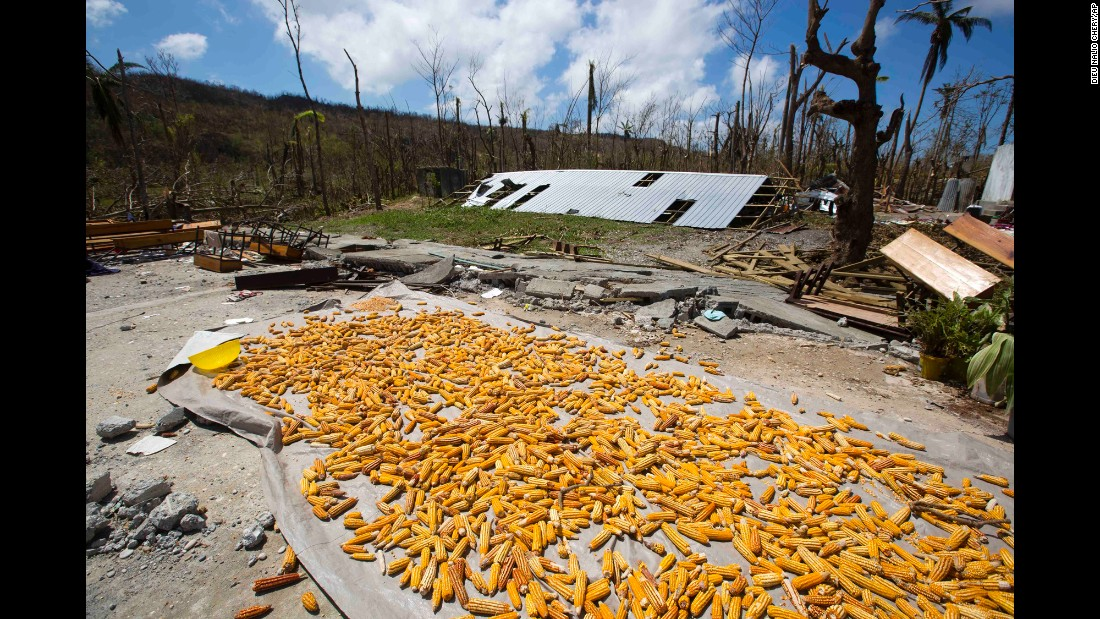 Corn salvaged from destroyed crops dries in the sun Saturday after Hurricane Matthew swept through Jeremie.