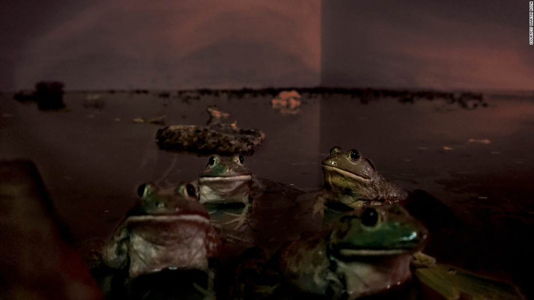 The basement of the gallery was flooded and inhabited by rescued bullfrogs.