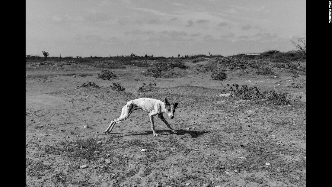 A starving dog runs in the backyard of his house. His owners say they eat only once a day because of the crisis.