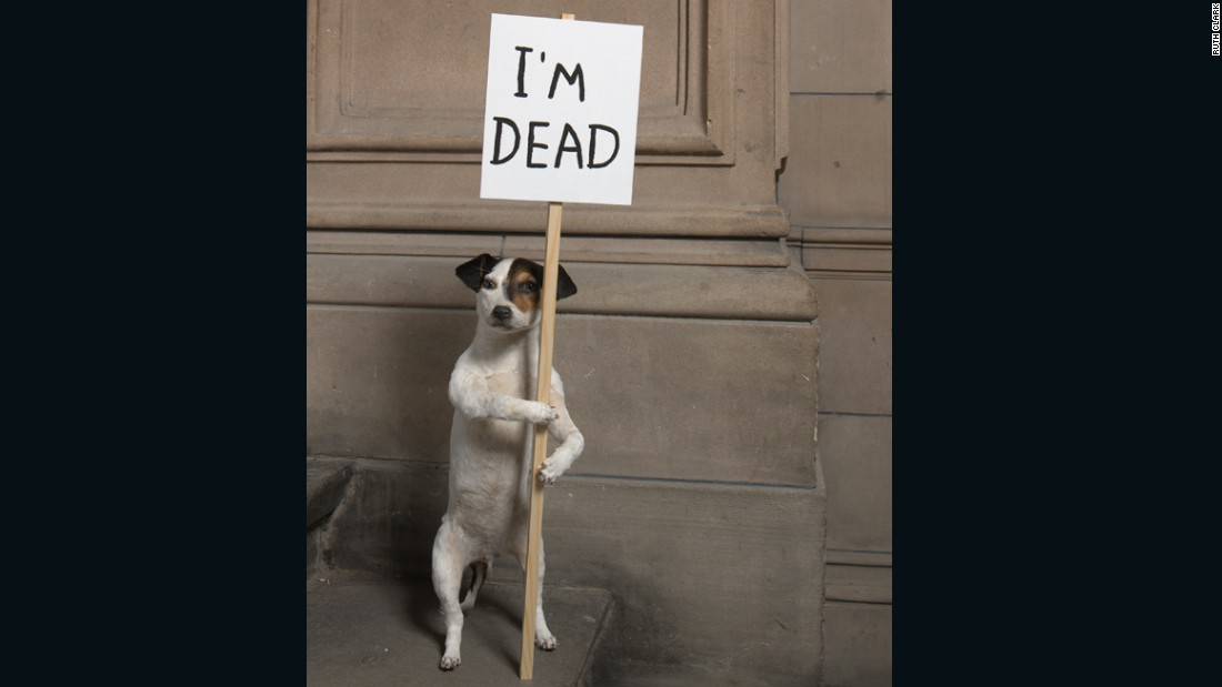 """""""I'm Dead"""" (2010), taxidermy puppy with wooden sign and acrylic paint.<br />"""