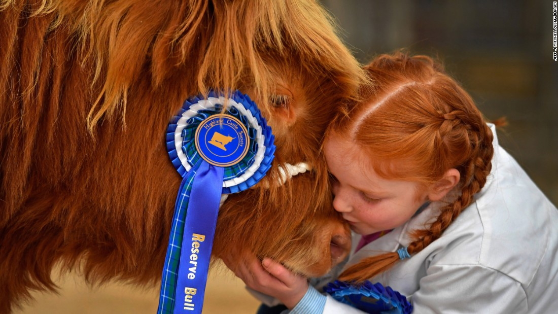 Kate Cameron, 8, kisses a bull named Abernethy at an annual pedigree cattle event in Oban, Scotland, on Monday, October 10.