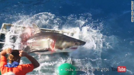 shark diver cage