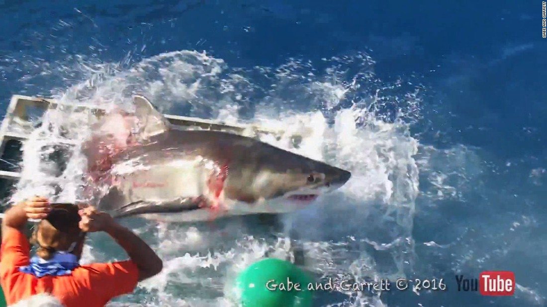See shocking encounter with great white shark