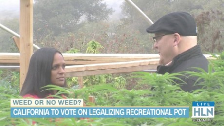 hln michaela california pot legalization prop 64_00010015.jpg