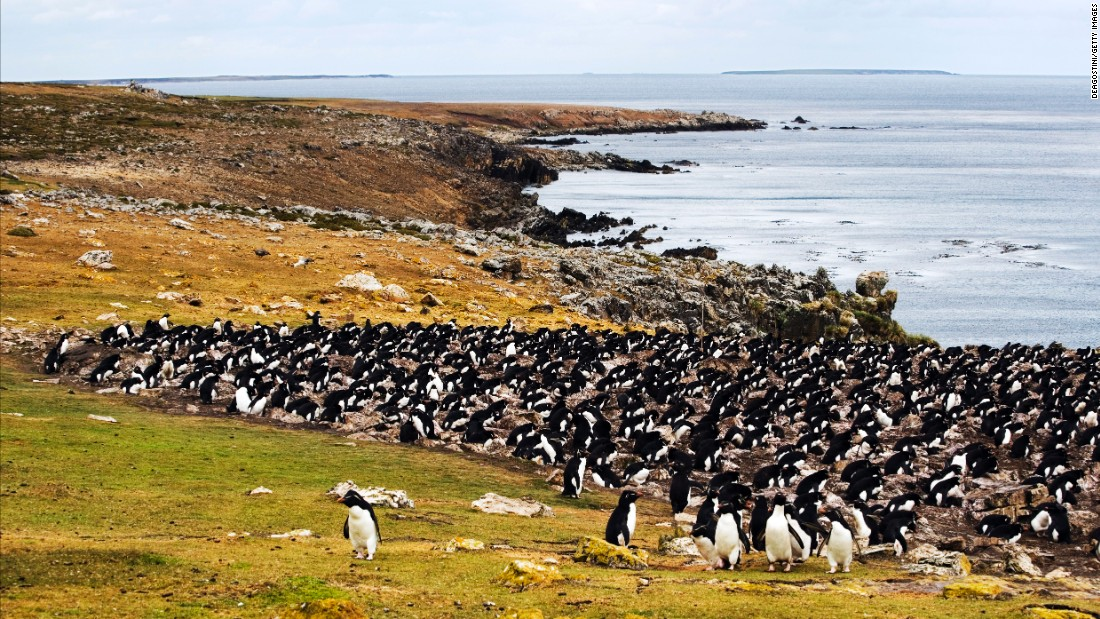 Named for the semi-precious stones that dot its beaches, Pebble Island in the Falklands is a favorite gathering place for penguins, cormorants and other native birds. Consider it your destination for natural, unadulterated squawking -- as opposed to the political kind.
