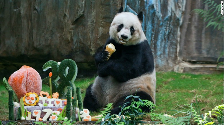 At 38, Jia Jia was the oldest living panda in captivity.